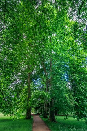 Amazing green tree in bally park schoenenwerd switzerland