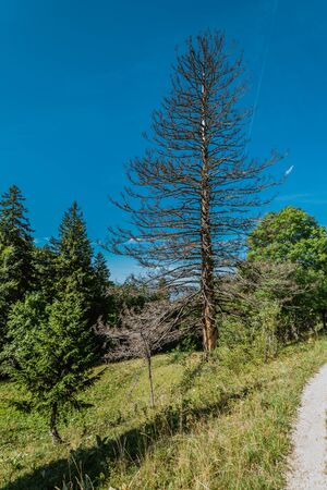 hiking on weissenstein mountain in switzerland, panorama of swiss alps, solothurn Stock Photo - 128611682