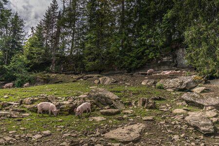 a farm between the beautiful swiss alps near toggenburg, summer Stock Photo - 128611639