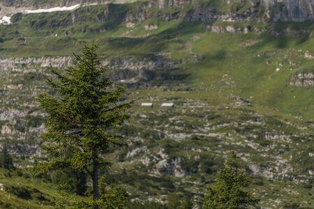 a farm between the beautiful swiss alps near toggenburg, summer Stock Photo - 128611655