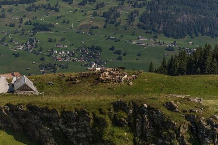 cows on a farm between the beautiful swiss alps near toggenburg, summer Stock Photo - 128611606