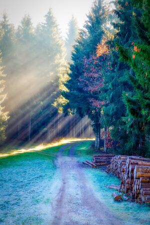 Magical black forest with sun rays in the morning, germany
