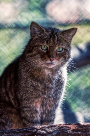 Detailed portrait of a brown cute cat looking in the camera, germany 스톡 콘텐츠 - 132088625