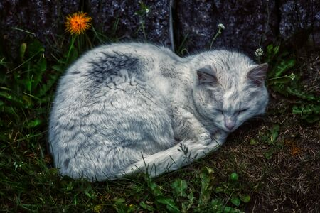 Detailed portrait of a white cute cat resting on green gras, iceland 스톡 콘텐츠
