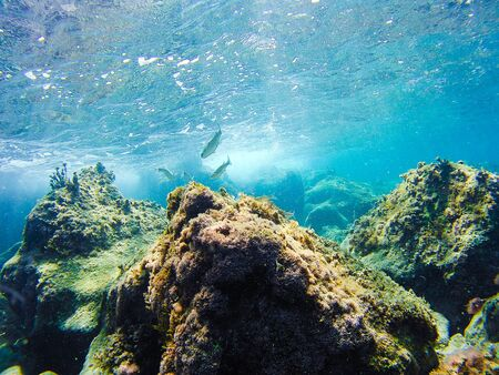 Vegetación submarina colorida en el mar Mediterráneo