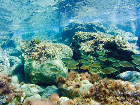 Colorful underwater vegetation in the Mediterranean sea Banque d'images