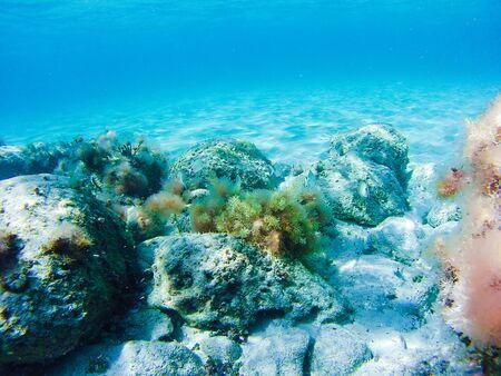 Colorful underwater vegetation in the Mediterranean sea, Malta Banque d'images