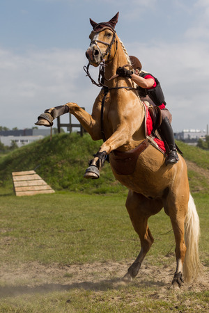 light brown horse: Voorhout, The Netherlands - June 15, 2014 - Bucking horse with a rider at a cross event, photo taken june 15th, 2014