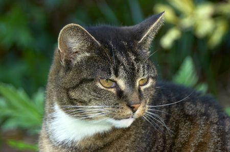 Portrait dun vieux chat avec sur des dents