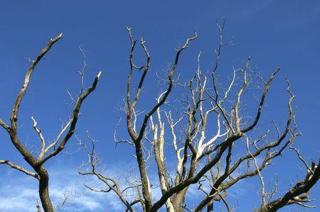 autmn: tree in autmn against a blue sky Stock Photo