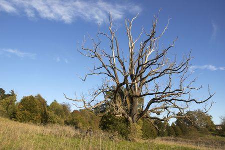 autmn: trees in autmn against a blue sky