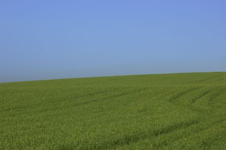 A green field with a blue sky in winter Stock Photo - 767260