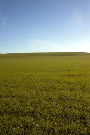 A green field with a blue sky in winter Stock Photo - 776933