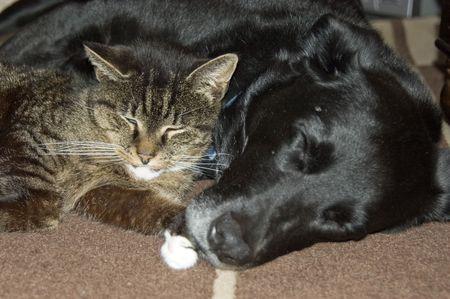 amigos abrazandose: Un gato y un perro durmiendo juntos en la alfombra