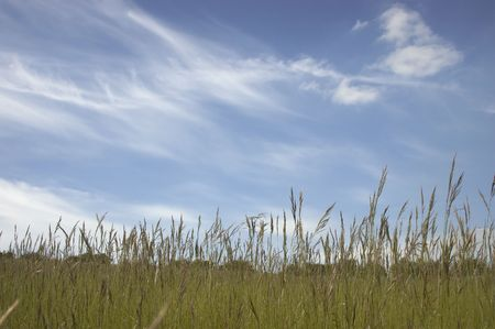 Uncut grass and sky Stock Photo - 1119082