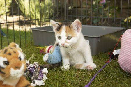 Un petit chaton avec une jambe Brocken dans une cage Banque d'images