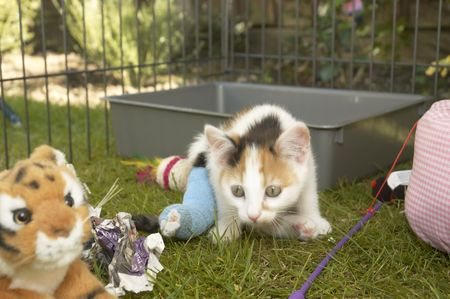 A small kitten with a brocken leg in a cage   Stock Photo