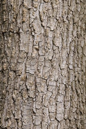 Close up of some tree bark for background