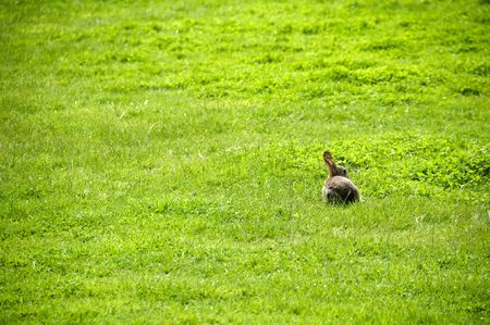 A small rabbit in a field of  grass photo