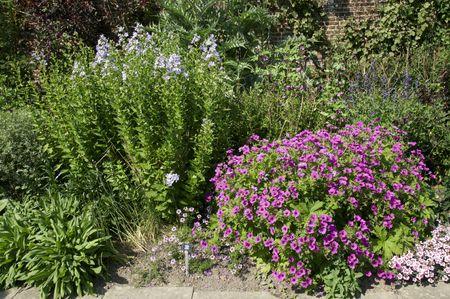 herbaceous border: A   herbaceous border in an English cottage garden