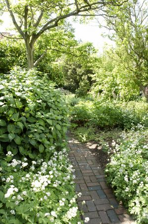 path cottage garden: A   herbaceous border in an English cottage garden