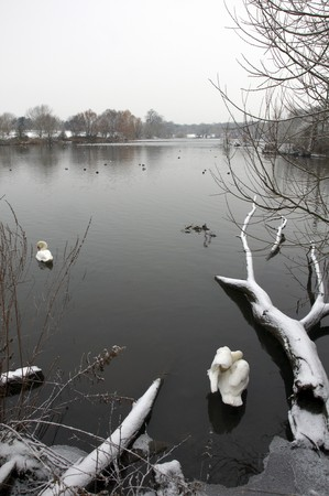 A lake in winter with a fallen tree in the foreground photo