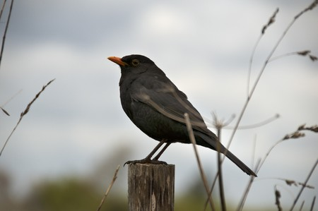 fencepost: A bird sitting on a fence post with a cloudy sky in the background Stock Photo