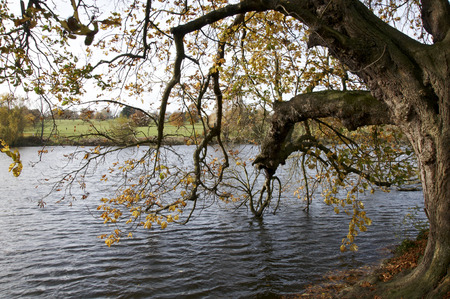 autmn: A veiw of trees iover a lake in autmn