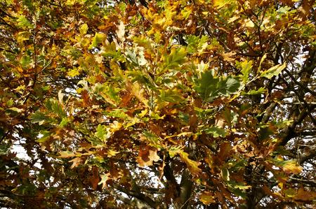 autmn: Autmn leaves on the tree.