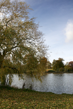 A view of trees across a lake