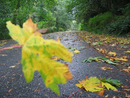 Autumn leaves falling on the road