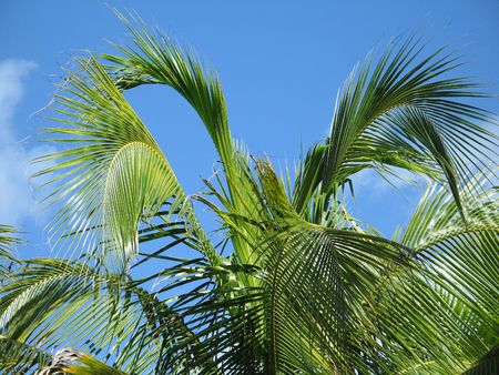 palm tree leaves Stock Photo - 2969014