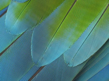 color feather close-up Stock Photo - 3041667