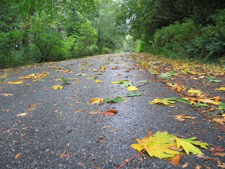 fall leaves falling on the road