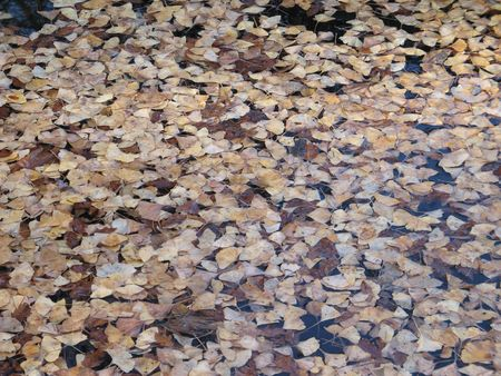 floating leaves on a lake Banco de Imagens