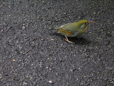 small green bird photo