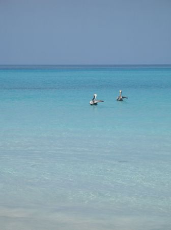exoticism: pelicans on the turquoise water Stock Photo