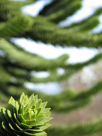 green monkey tree close up