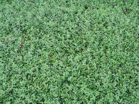 groene bladeren achtergrond Stockfoto