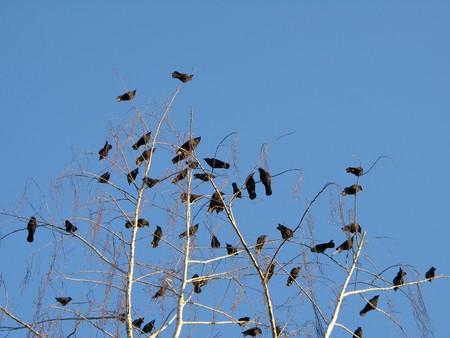 까마귀 가족 나무에