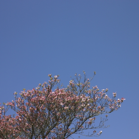 Pink flower tree photo