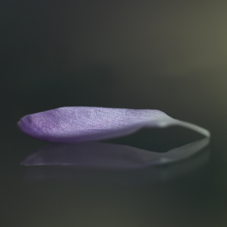 Purple flower petal photo