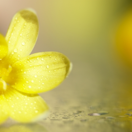 yellow flower Standard-Bild
