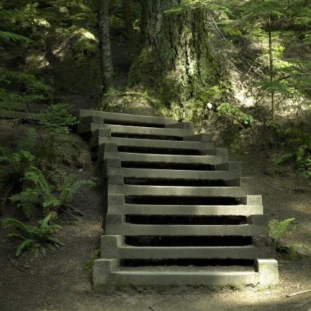 stairs in the forest photo
