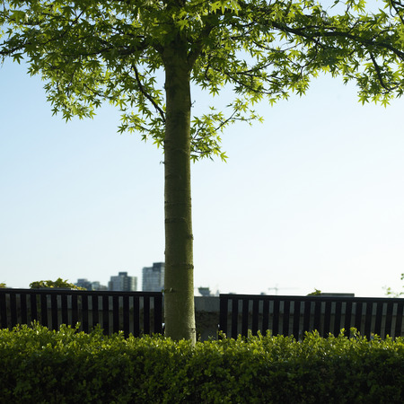 civic: Small tree and city view Stock Photo