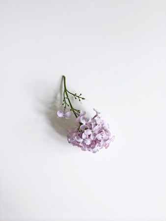 trimmed: Trimmed lilac sprig on a white background Stock Photo