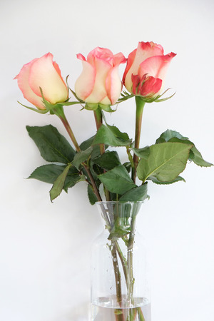 long stem roses: Orange long stem roses in a vase Stock Photo
