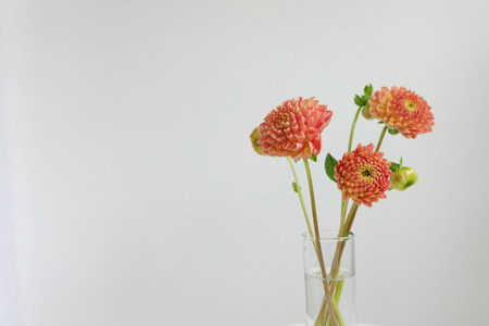 glass vase: Orange dahlias in a glass vase