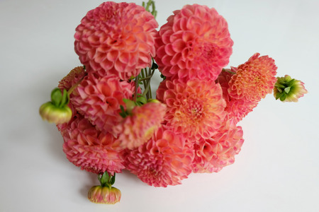 Bouquet of coral dahlias on white Stock Photo