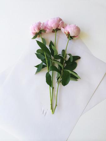 pfingstrosen: Bouquet von drei rosa Pfingstrosen Lizenzfreie Bilder